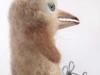 rare vogel van witte schapenwol (schiermonnikoog)